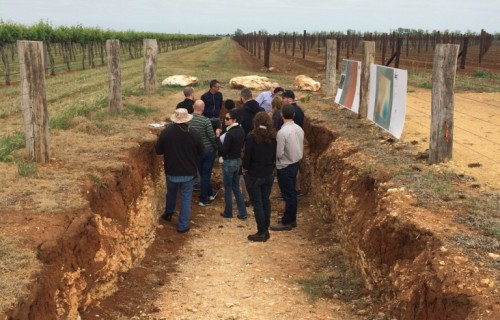 Soil pit at Wynns, Coonawarra