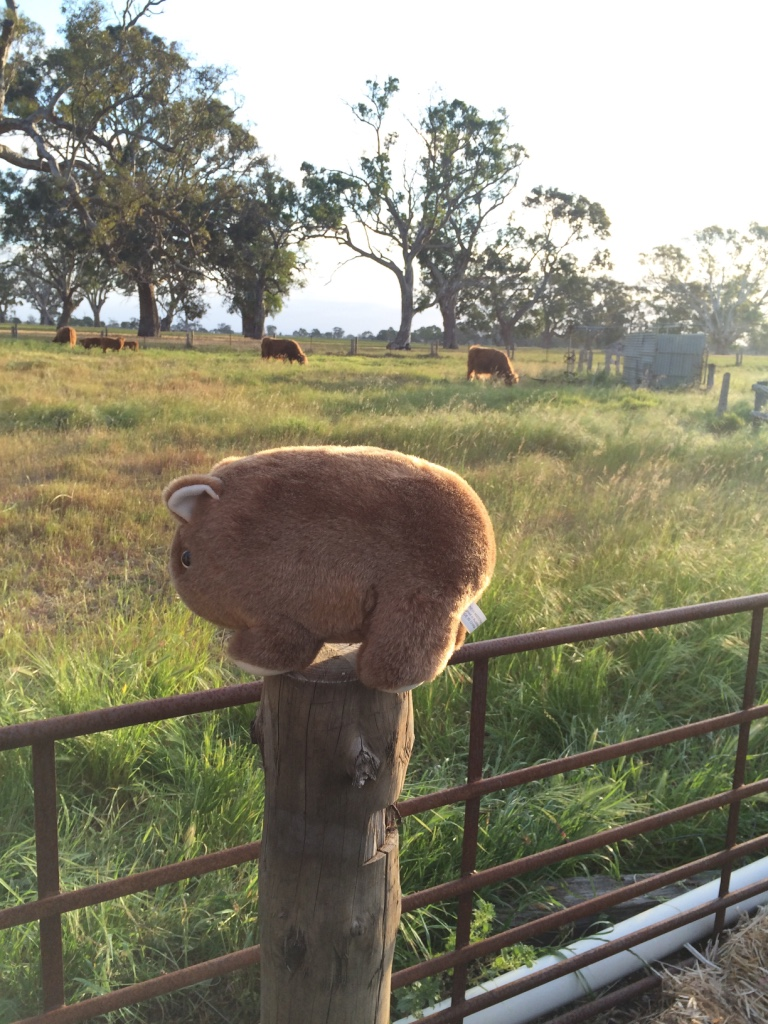 Wombat on a pole, Bellweather