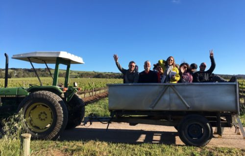 Tractor tour of Scarce Earth Single Vineyards wines at Battle of Bosworth