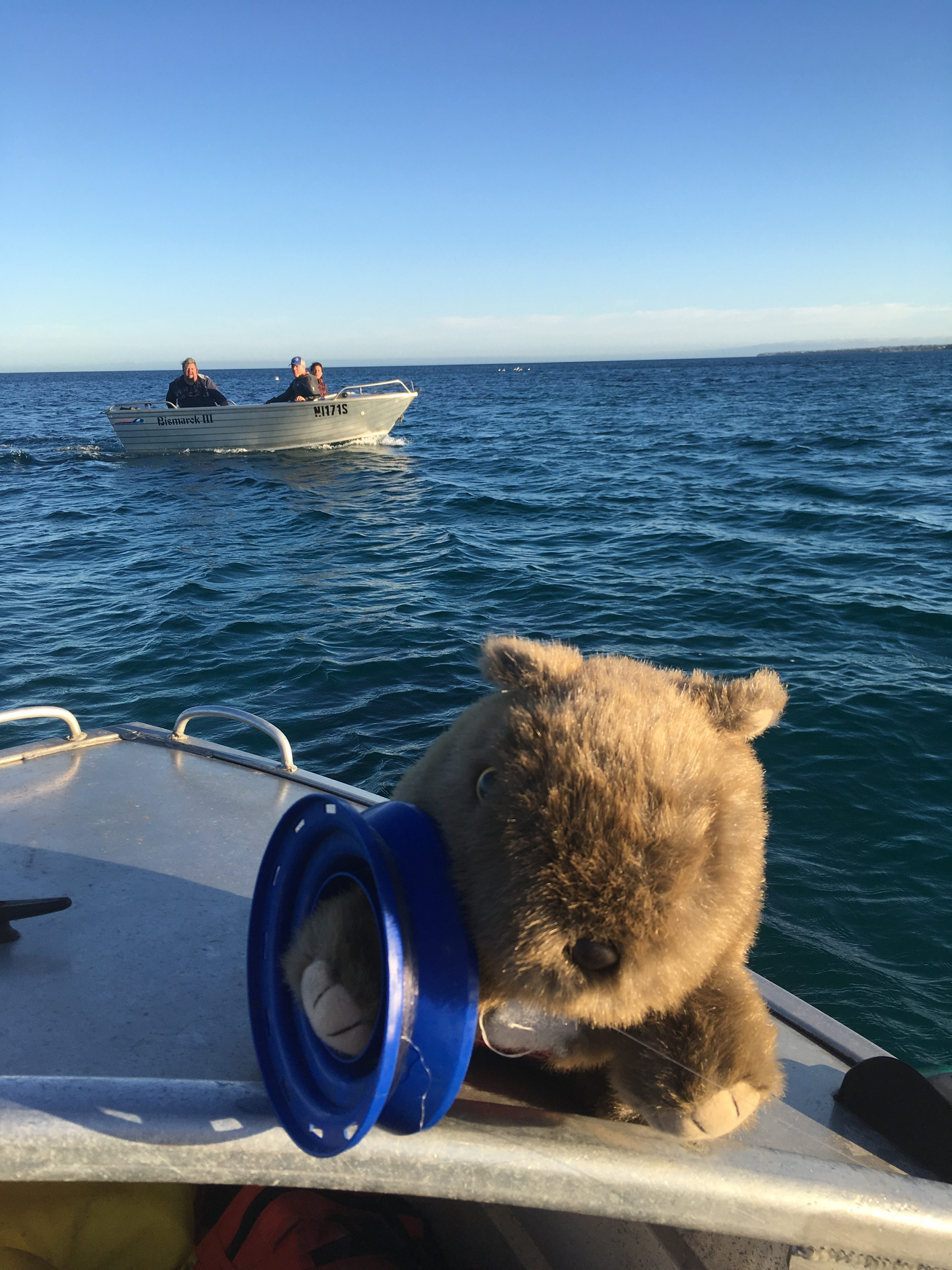 Wombat fishing skills